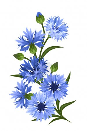 Illustration for Vector branch of blue cornflowers isolated on a white background. - Royalty Free Image