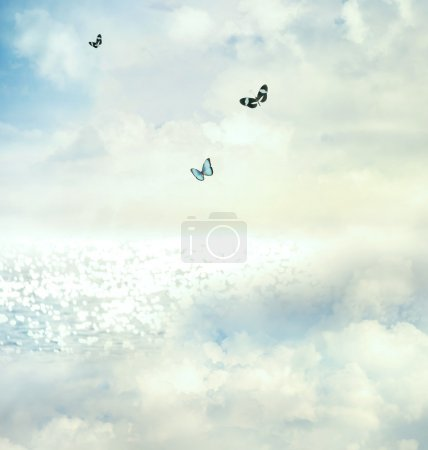 Photo for Blue butterflies on the horizon - Royalty Free Image