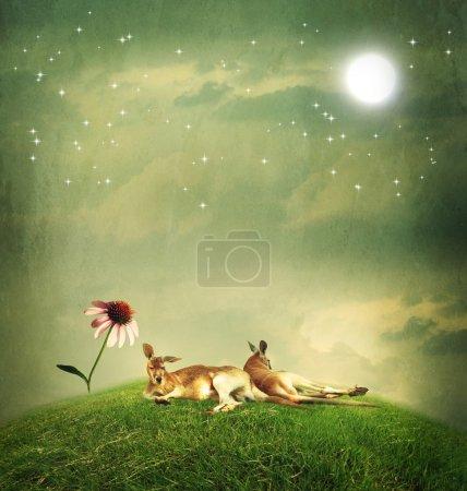 Kangaroo couple relaxing on hilltop