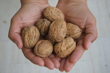 Walnuts on palm hands