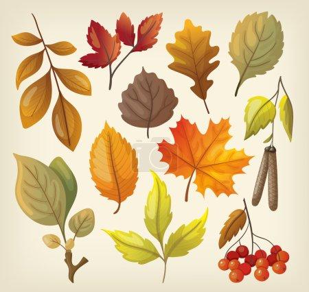 Illustration pour Ensemble de feuilles d'automne isolées colorées . - image libre de droit