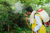 Maracuya plantation fumigating