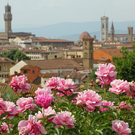 Pink peony flowers and fantastic panorama
