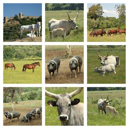 Collage von Nutztieren