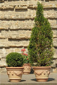 Tuscan pots with plants