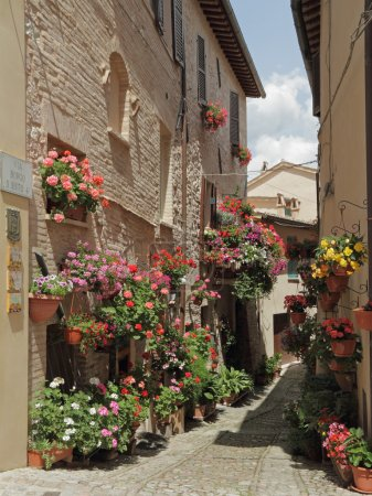 Old paved street with flowers