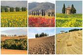 Wonderful Tuscan landscape