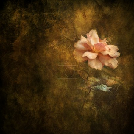 Painterly Peach Rose Background