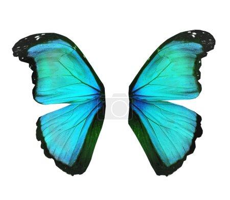 Photo pour Ailes de papillon morpho turquoise, isolé sur blanc - image libre de droit