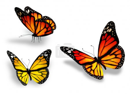 Photo for Three yellow butterfly, isolated on white background - Royalty Free Image