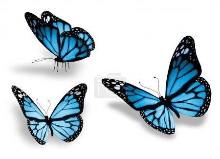 Photo pour Trois papillons bleus, isolés sur fond blanc - image libre de droit