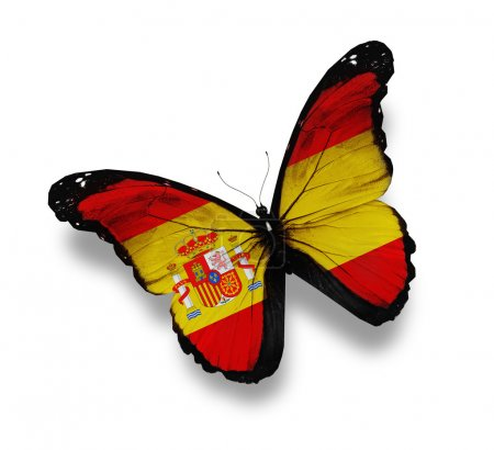 Photo for Spanish flag butterfly, isolated on white - Royalty Free Image