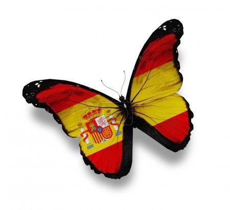 Photo pour Papillon drapeau espagnol, isolé sur blanc - image libre de droit