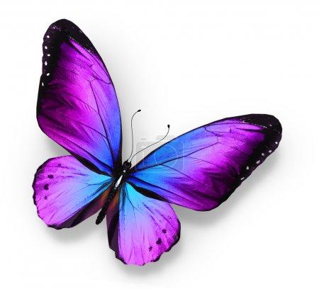 Photo pour Violet papillon bleu, isolé sur blanc - image libre de droit