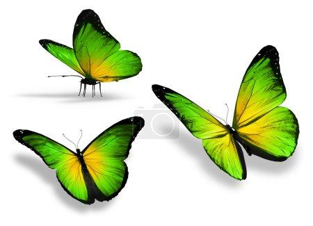 Photo pour Trois papillons verts jaunes, isolés sur fond blanc - image libre de droit