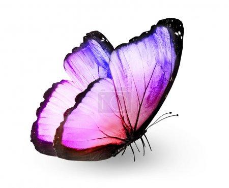 Photo pour Papillon couleur, isolé sur blanc - image libre de droit