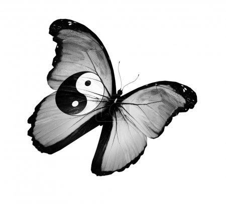 Photo pour Dao drapeau papillon volant, isolé sur fond blanc - image libre de droit