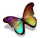 Sötét zöld arany lila pillangó morpho, elszigetelt fehér