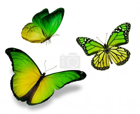 Photo for Three green yellow butterfly, isolated on white background - Royalty Free Image