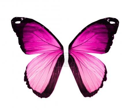 Photo pour Ailes de papillon rose-violet Morpho, isolées sur blanc - image libre de droit