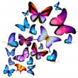 Many different butterflies flying, isolated on whi...
