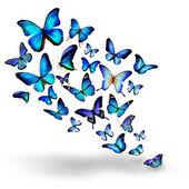 Sok kék különböző pillangók repülés