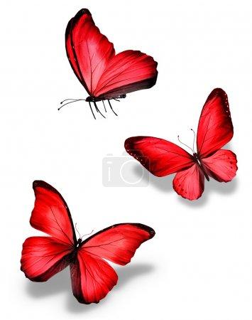 Photo pour Trois papillons rouges, isolés sur fond blanc - image libre de droit