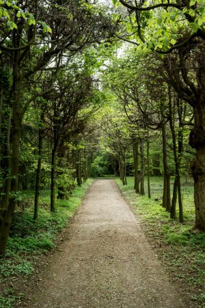 Tree alley with footpath