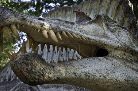 Dinosaur museum reproduction