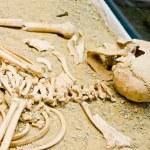 Archeology, human bones...