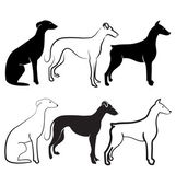 Doberman and Greyhound dogs