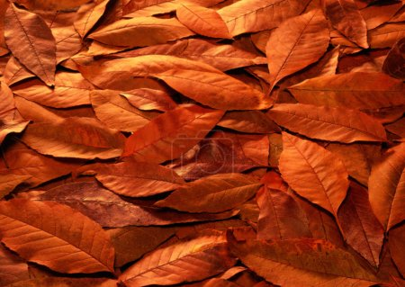Plant background, leaves