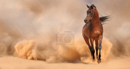 Photo pour Cheval arabe à court de la tempête du désert - image libre de droit