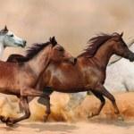 Herd gallops in the sand storm...