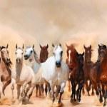 Horses herd running in the sand storm...