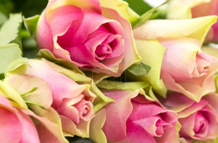 Photo for Bouquet of pink roses - Royalty Free Image