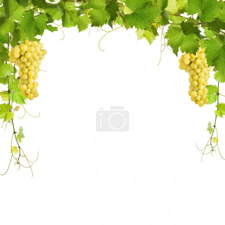 Collage of vine leaves and yellow grapes