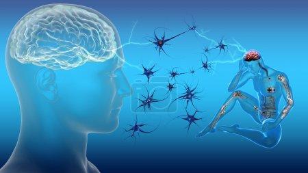 Men and brain