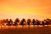 Barevné západ nebo východ slunce s obrysy palem