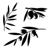 Graphic olive tree branches
