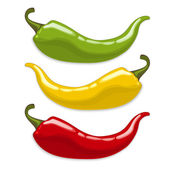 Chili peppers Isolated vector