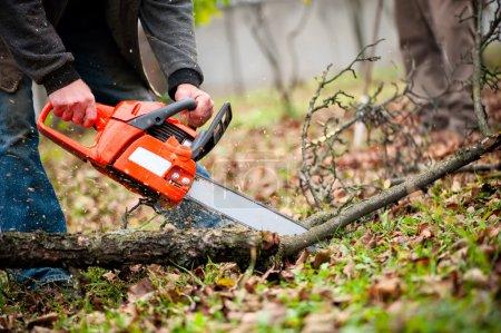 Photo pour Homme avec de l'essence propulsé tronçonneuse coupe feu du bois provenant d'arbres en forêt - image libre de droit