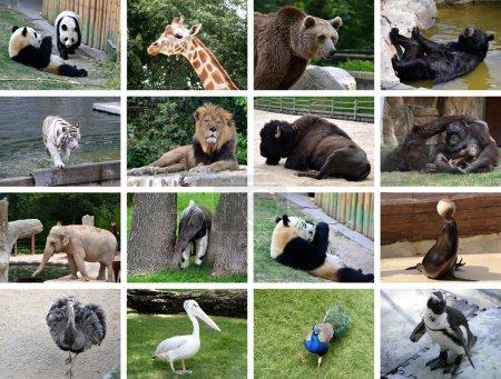 Photo pour Collage de différentes images d'animaux sauvages - image libre de droit