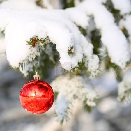 Red Ball on Christmas tree branch, covered with Snow. Outside