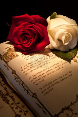 Photo for Genesis text of Adam and Eve in a bible with roses - the text illustration is copied from a 400 years old bible. - Royalty Free Image
