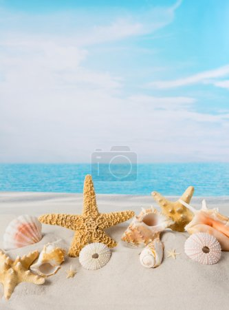Sea shells with copy space