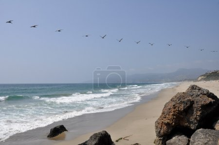 Pelicans in Flight at Malibu Beach, California