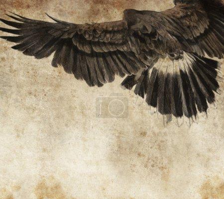 Photo pour Croquis réalisé avec une tablette numérique d'aigle américain - image libre de droit