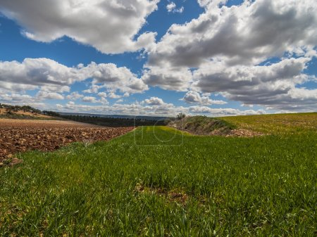 Photo for Farm, crop field. landscape with green grass. Spain agriculture. - Royalty Free Image