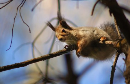 squirrel on the branch of tree
